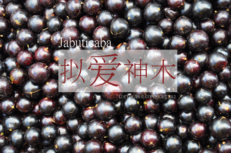 JIABAO_web.jpg