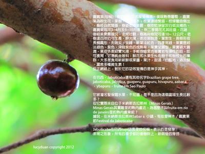 j61_web.jpg